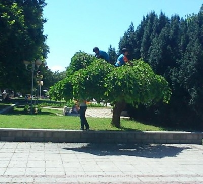 Цыгане на дереве - crimsons.jpg